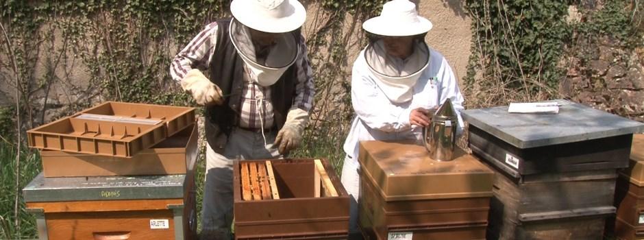 essaims d 39 abeilles comment d buter en apiculture. Black Bedroom Furniture Sets. Home Design Ideas