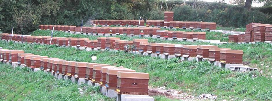 élever des abeilles naturellement